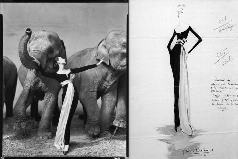 Avedon's Dovima with Elephants and YSL sketch for Dior, 1955